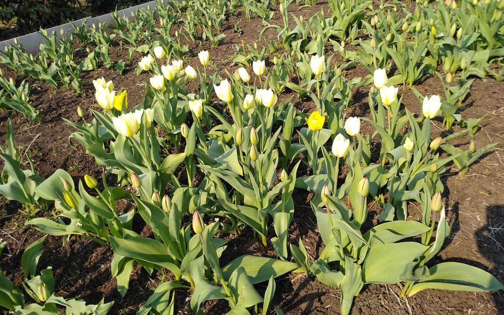 школа-семинар цветущий май