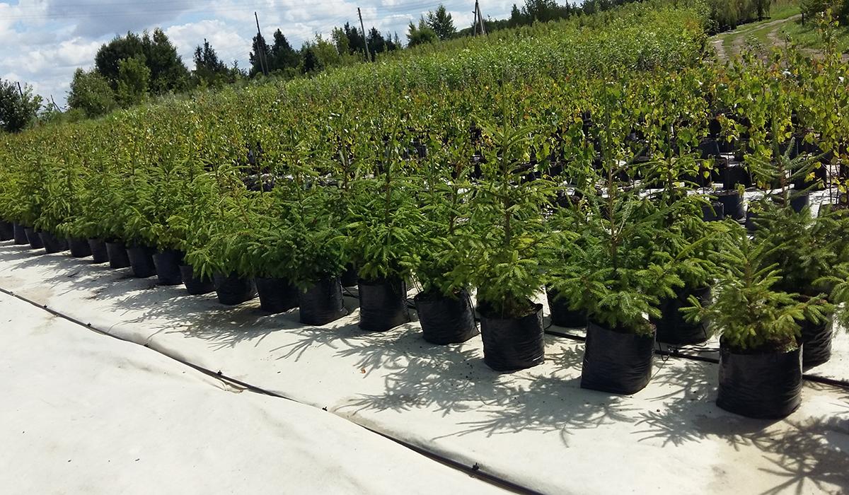 Ботанический сад НИУ «БелГУ» реализует посадочный материал