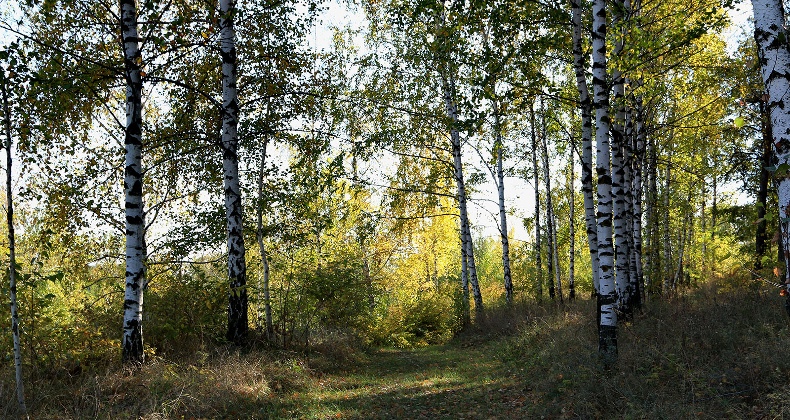 День лесного хозяйства – в научно-образовательном центре «Ботанический сад НИУ «БелГУ»